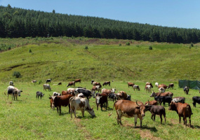 KwaZulu-Natal, ,Land,St Johns Village For Sale,1153