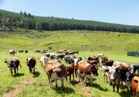 KwaZulu-Natal, ,Land,St Johns Village For Sale,1181