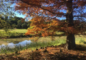 Address not available!, ,Land,River Goose For Sale,1309